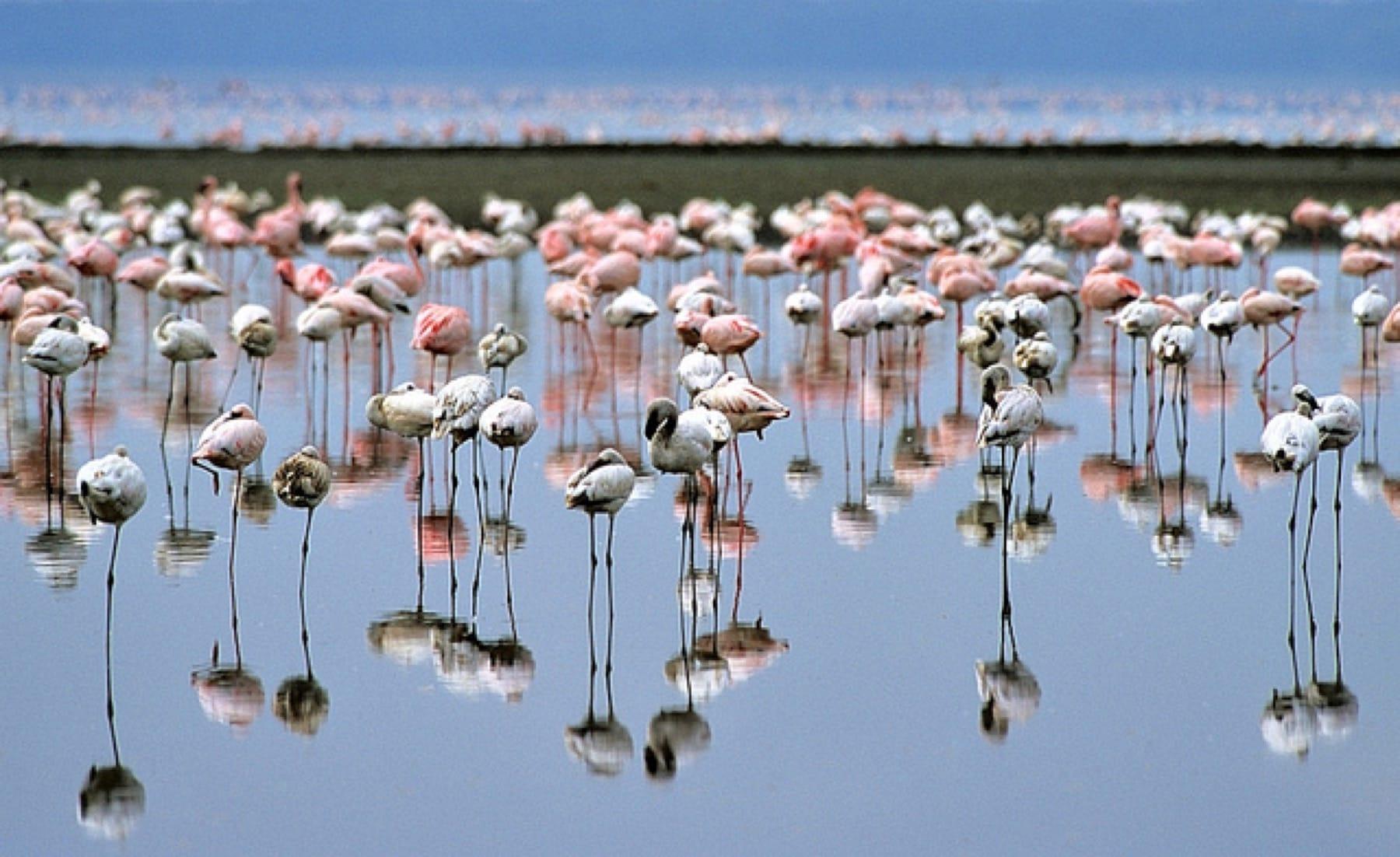 Kenya, Lesser flamingos|