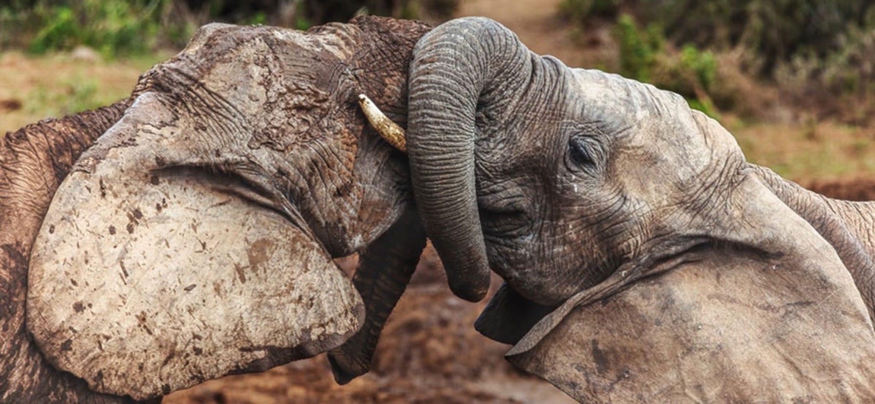 The Addo Elephant Park