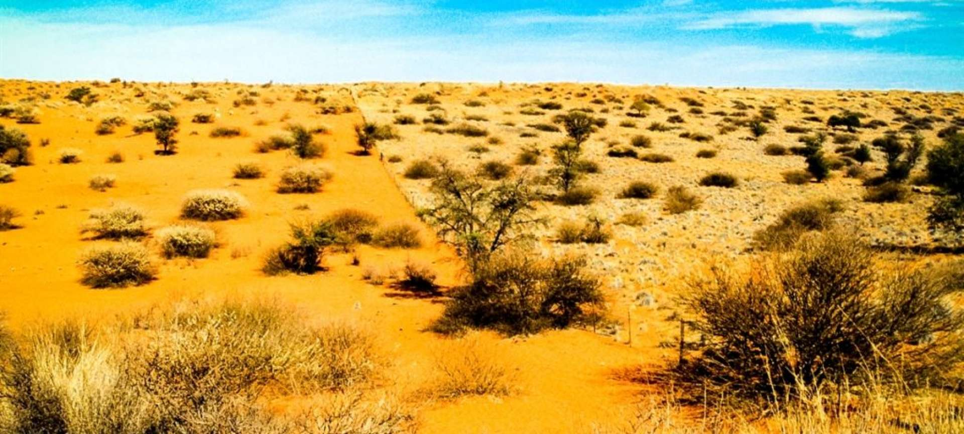 The Kalahari is a soectacular desert that teems with life