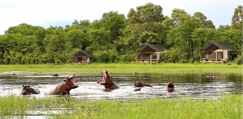 Hippos wading in the water are a common sight