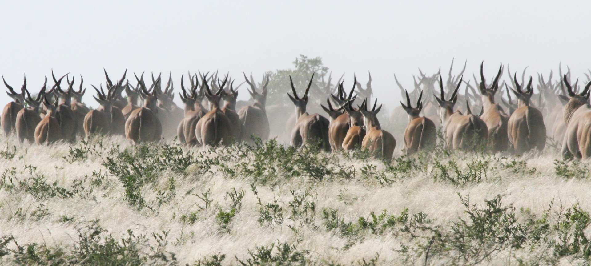 Wildlife is a major attraction in Botswana