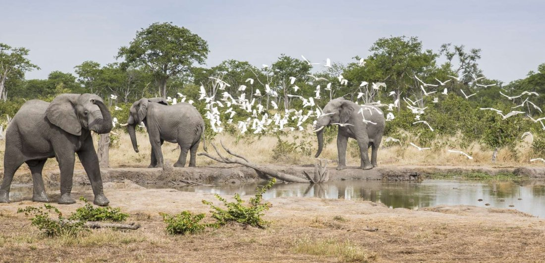 Botswana's Chobe region is home to the world's largest herds of elephant and prolific birds