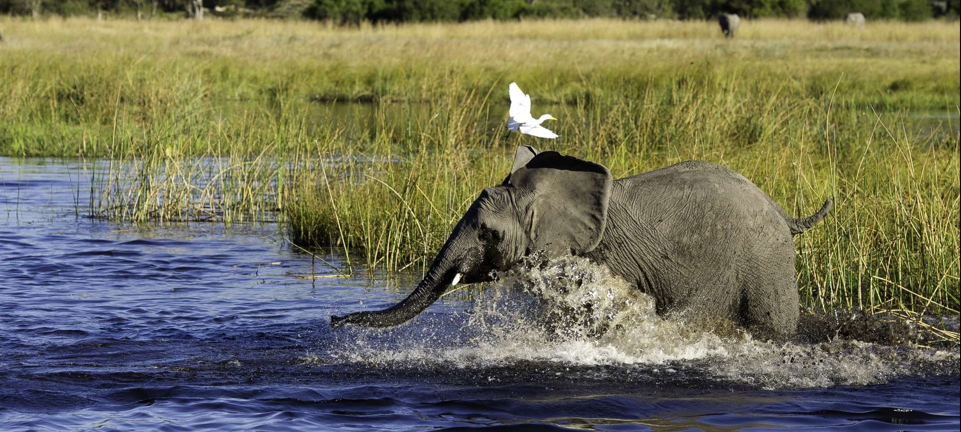 Wildlife is prolific throughout both South Africa and Botswana