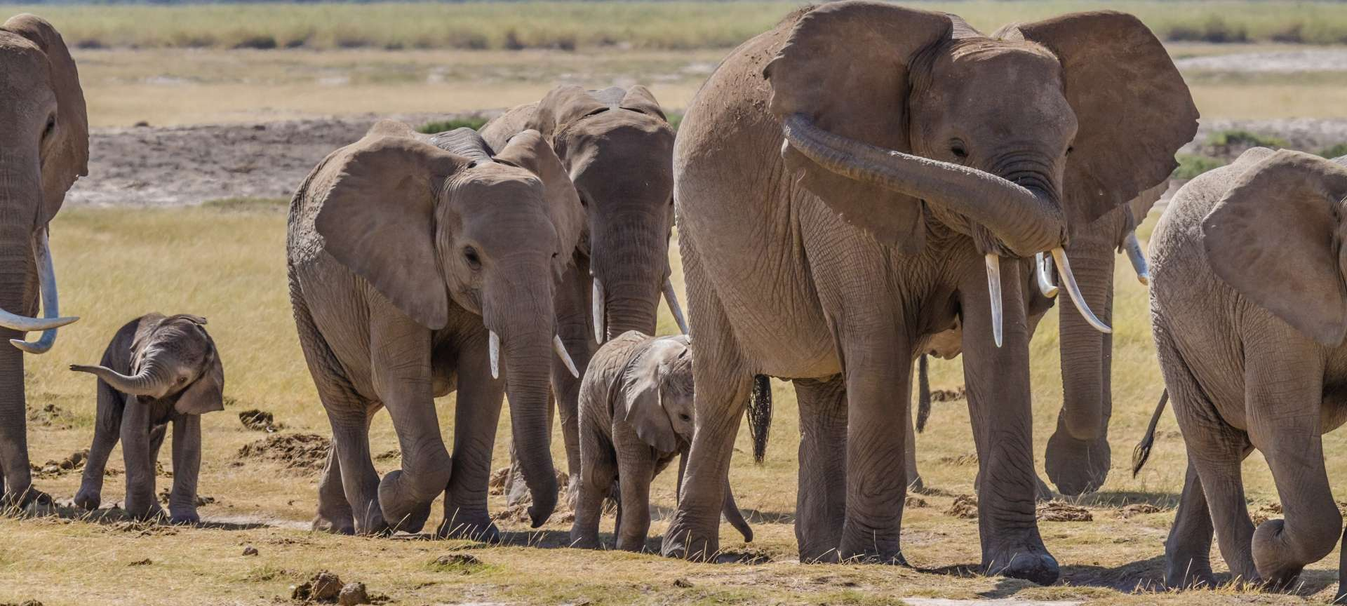 Elephant in Botswana are a sight to behold