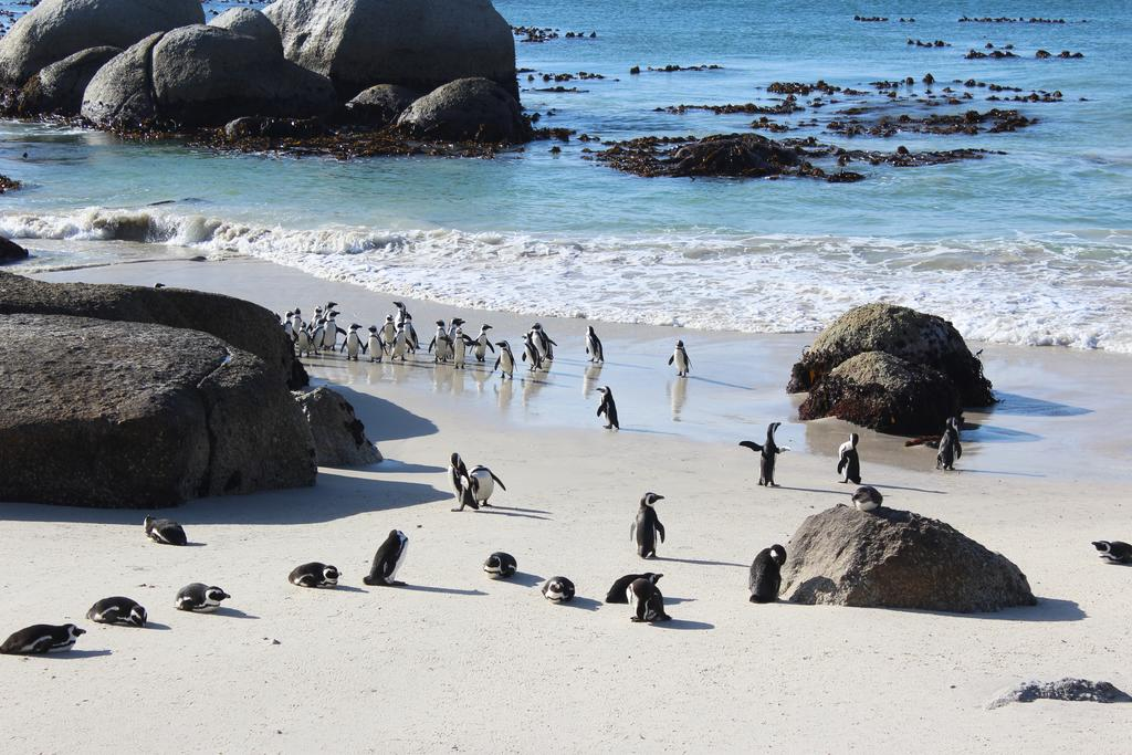 boulders beach cape town attractions south africa safari