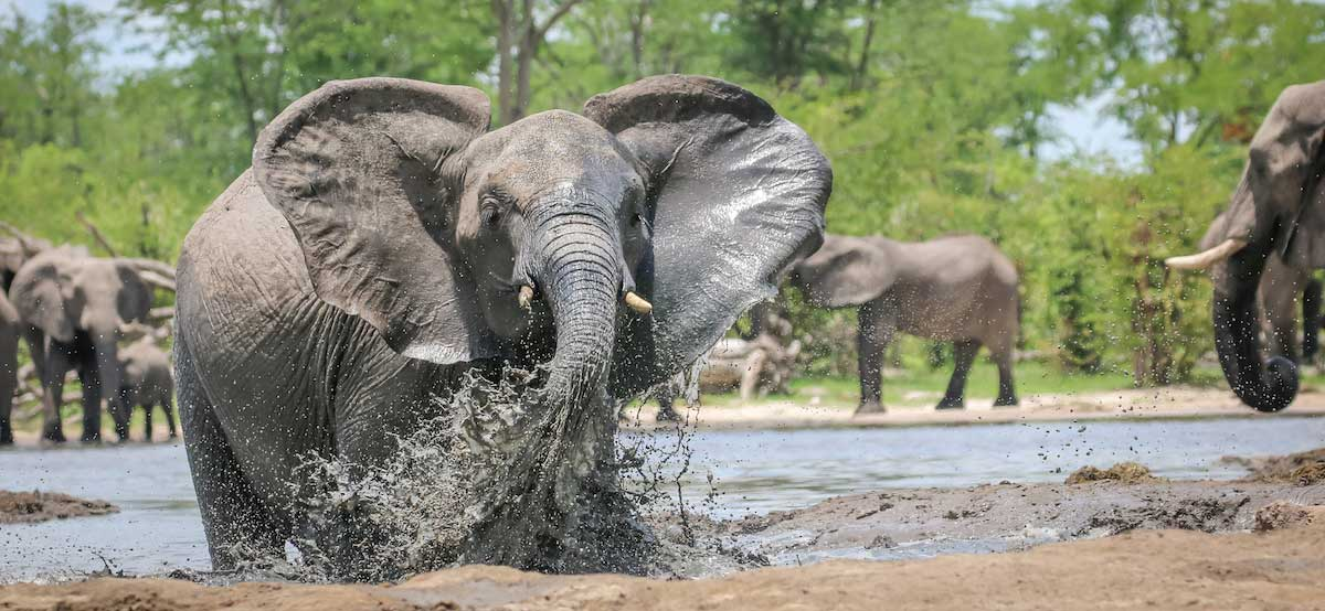 Elephant are prevelant in Botswana (credit Rachel Lang)