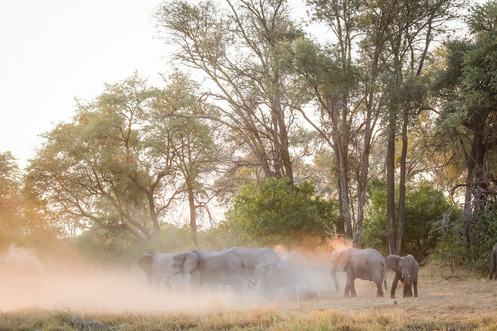 Elephants in Moremi (credit Rachel Lang)