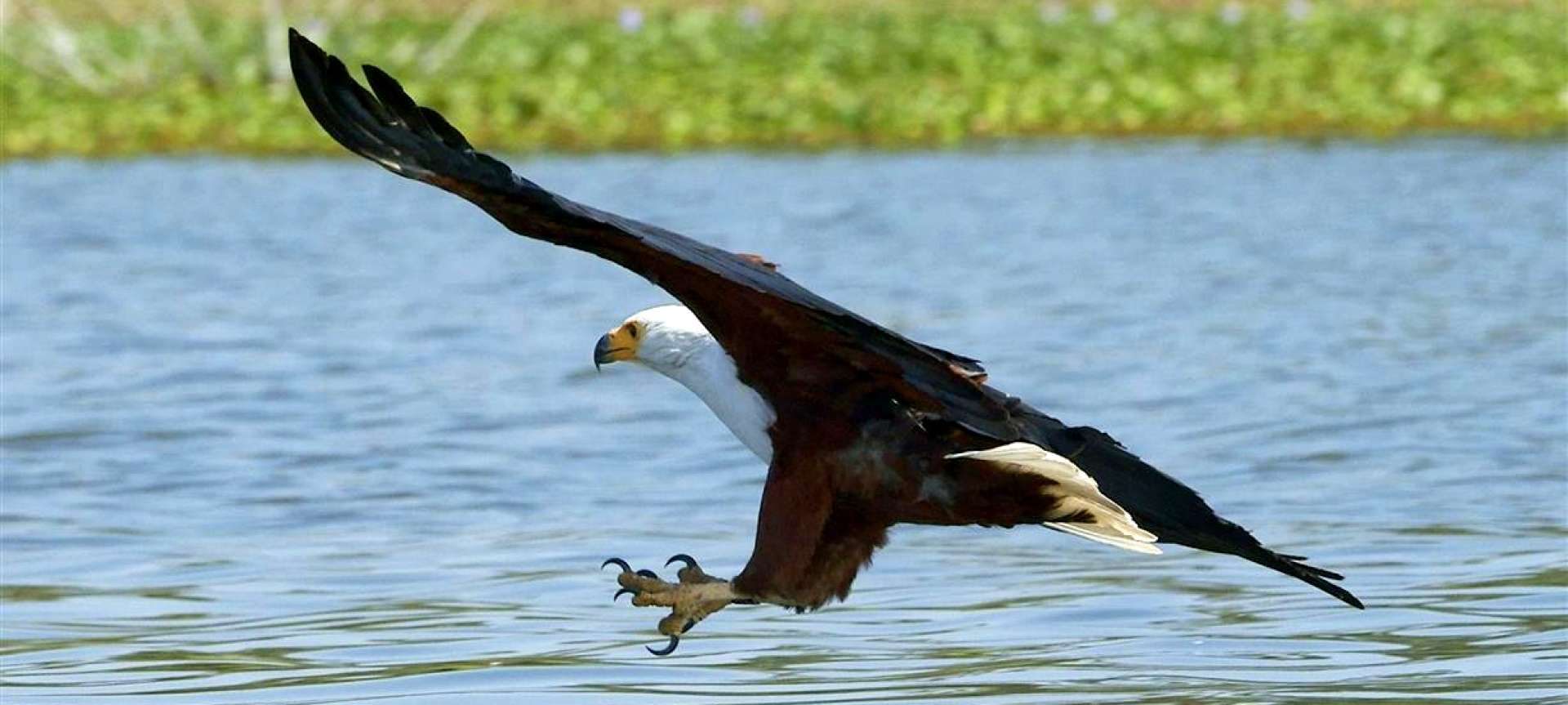 Fish Eagle_Rift Valley_Kenya