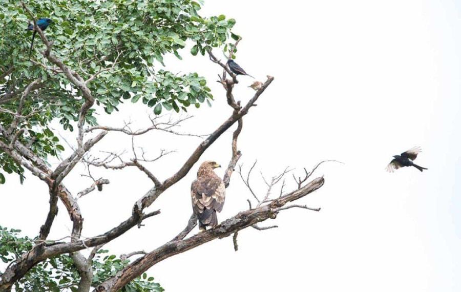 gonarezhou national park birding tour