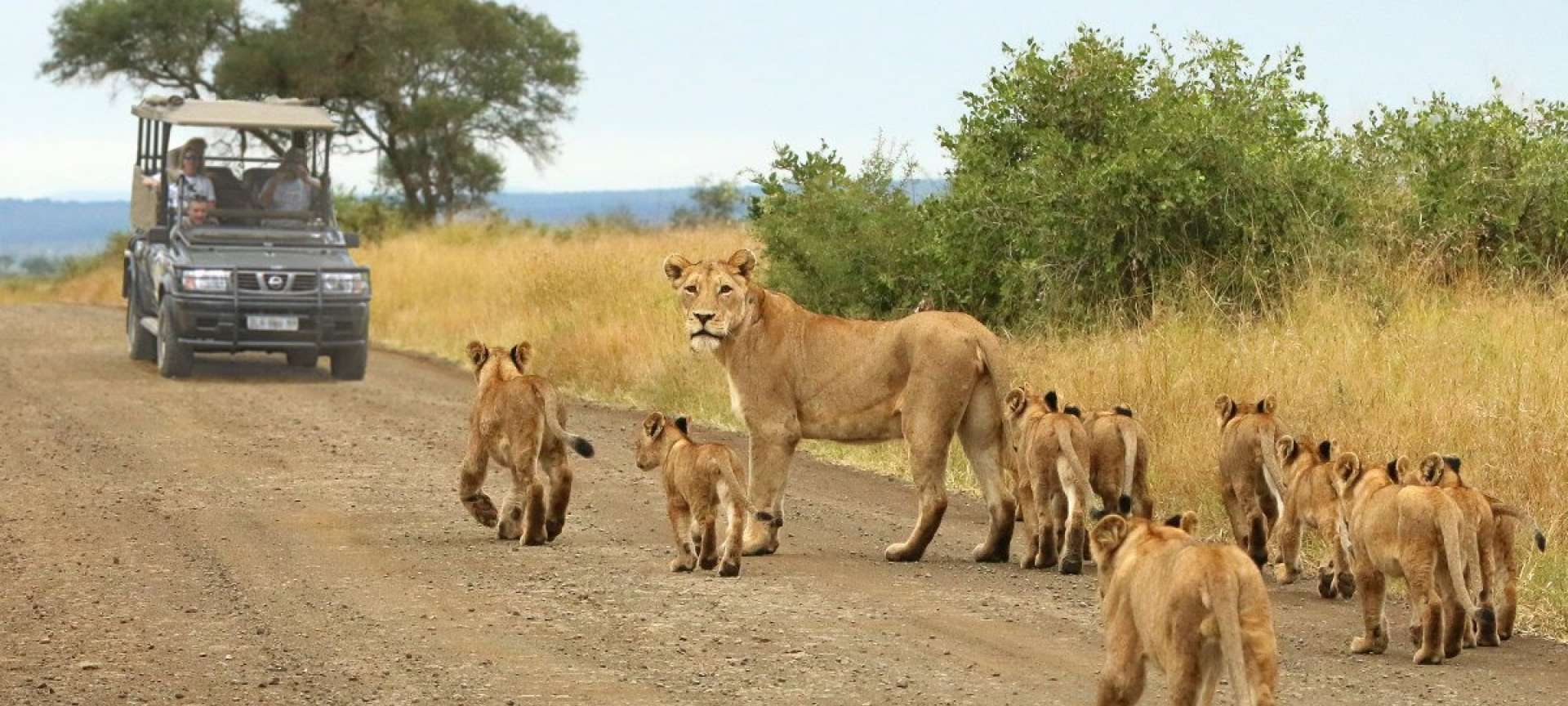 Wildlife spotting in August is a great time to visit the Kruger National Park