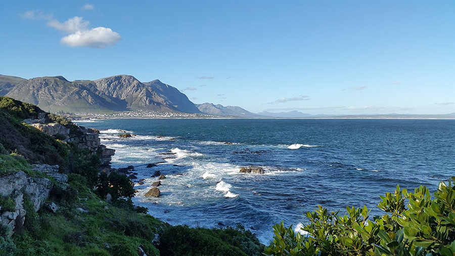 whale watching season in hermanus along the garden route