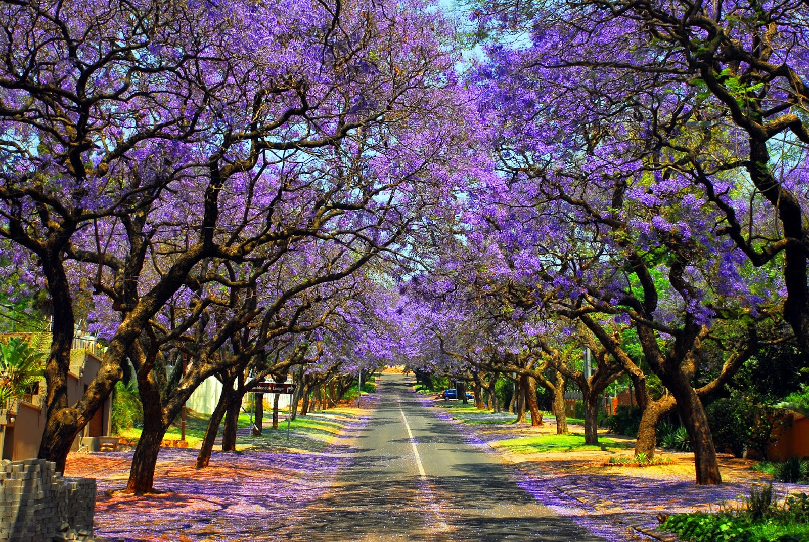 Gauteng, Kruger and the North_Jacaranda_Pretoria