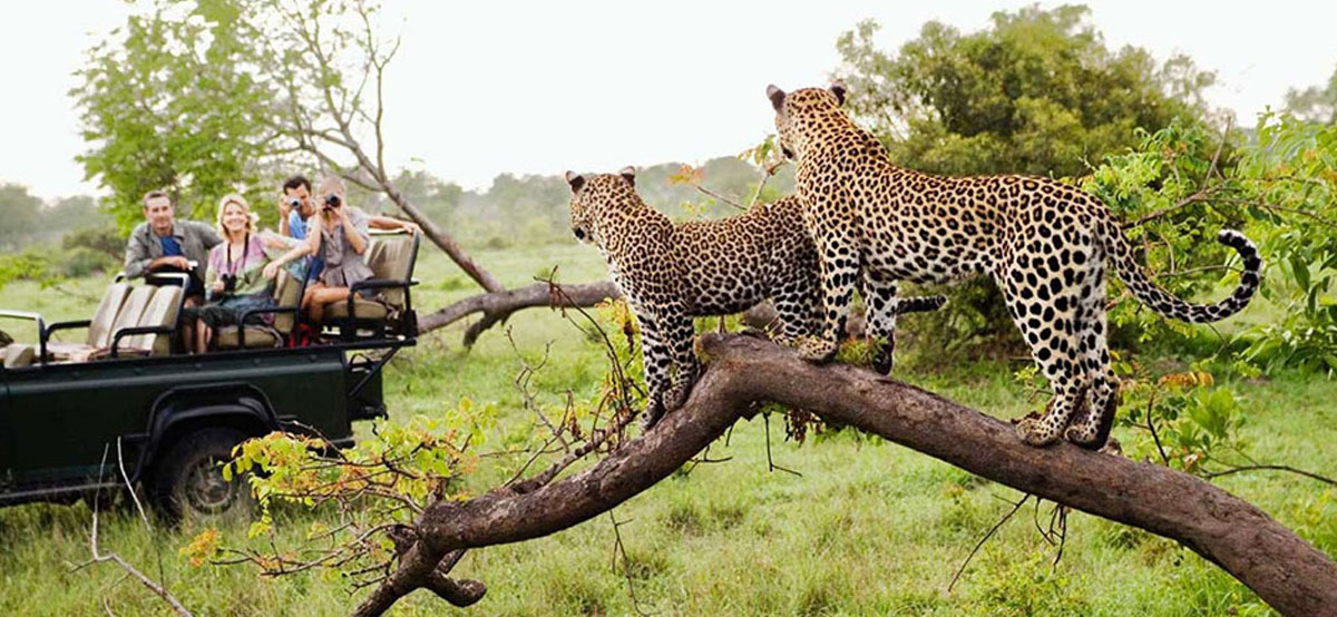 Kruger National Park_Game drive