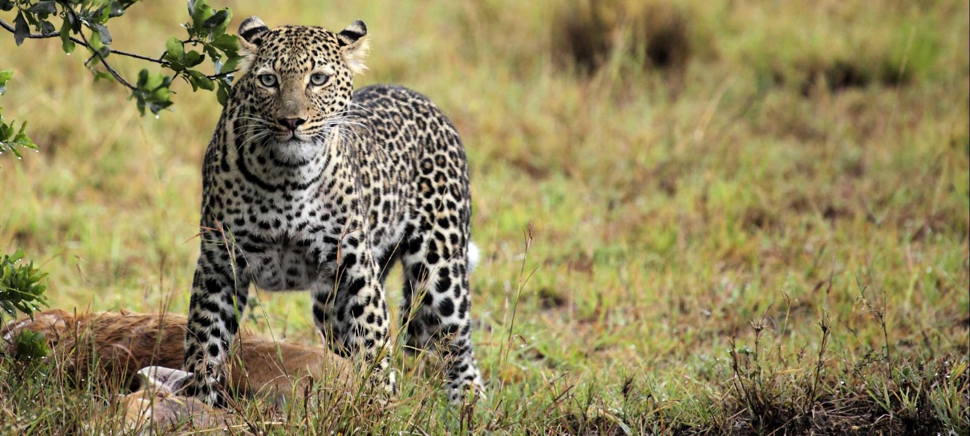 leopard are elusive big five animals to spot