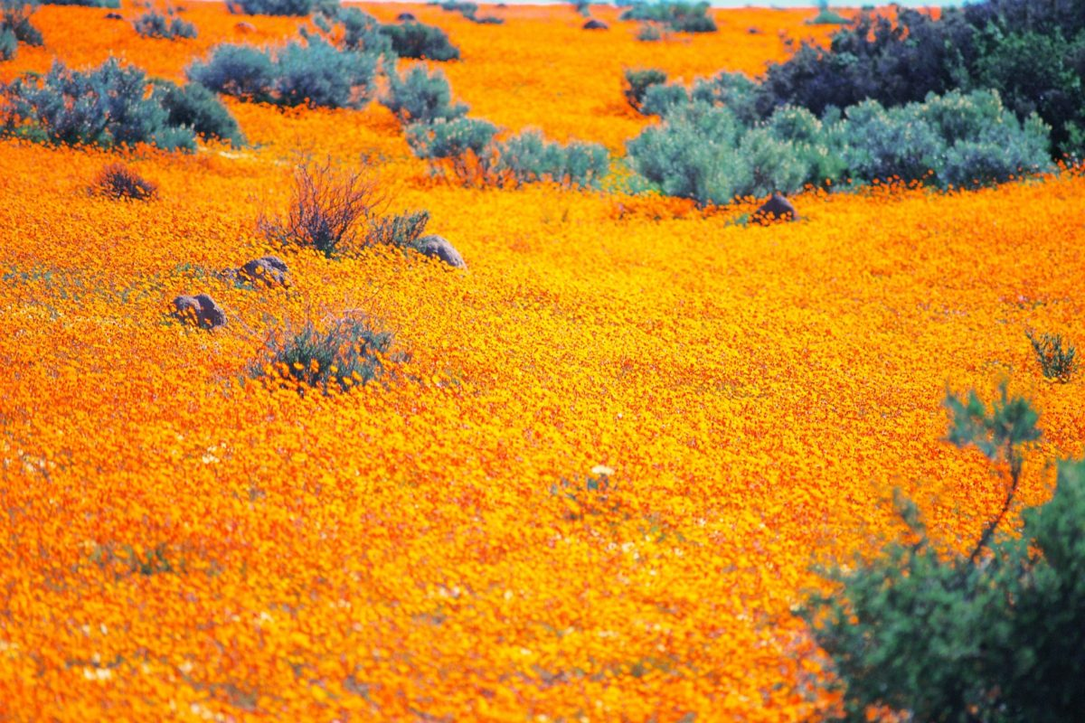 namaqualand northern cape south africa safari credit northern cape tourism