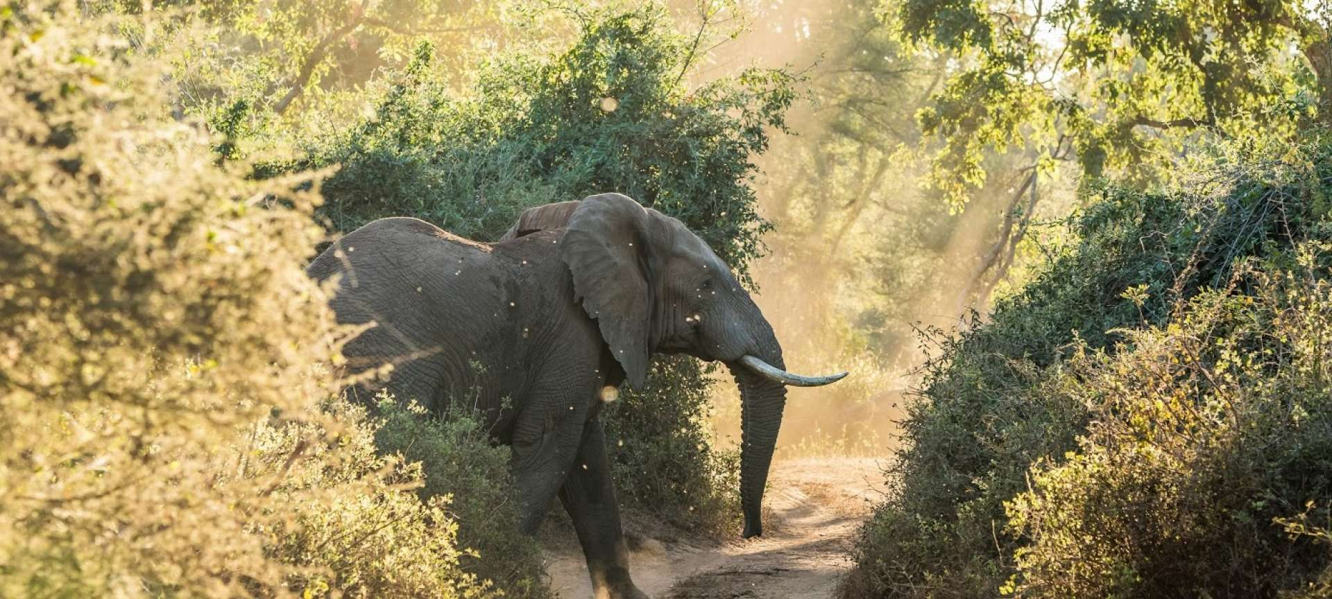 Kruger National Park_Parfuri_Elephant