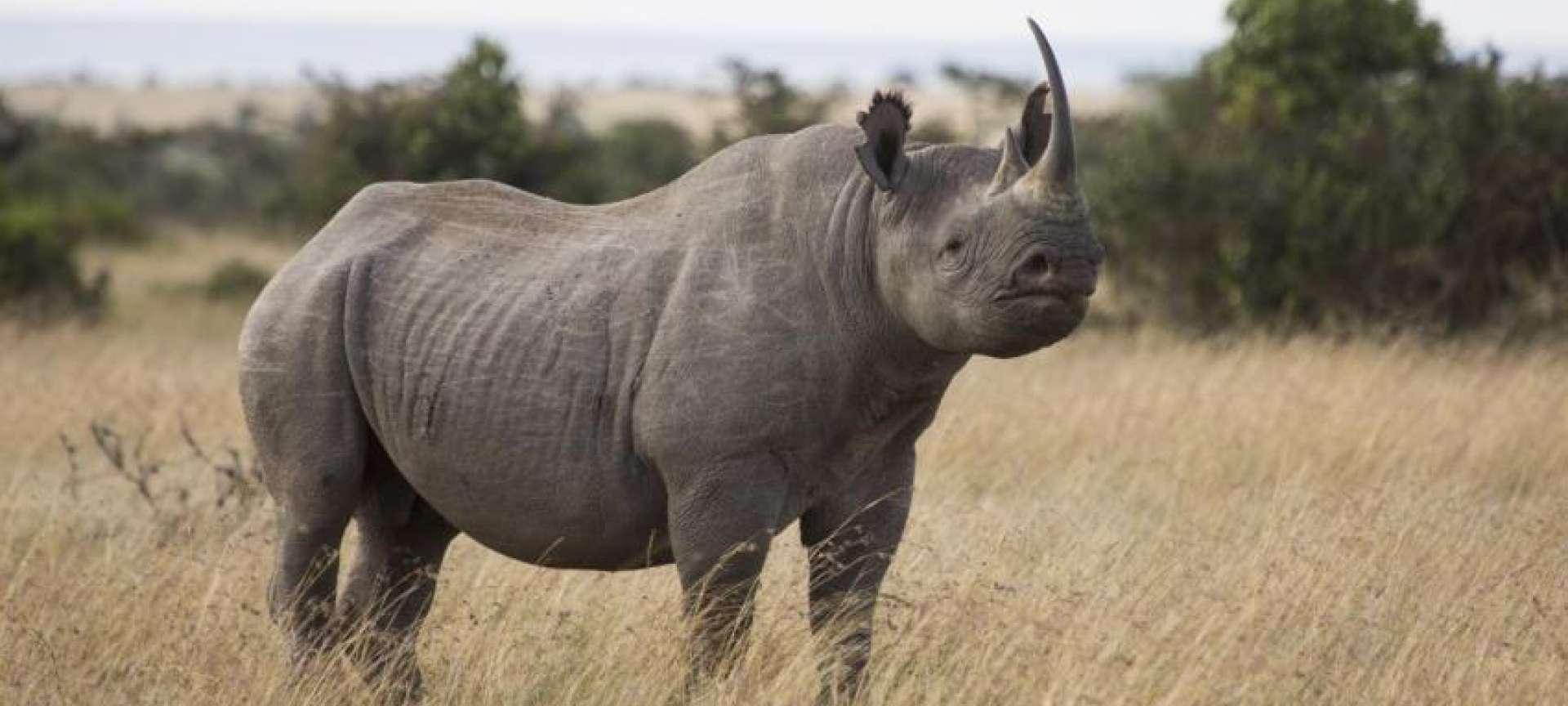 Rhino_Kenya_Wildlife