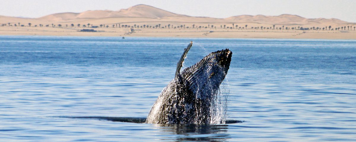Whale Watching Walvis Bay