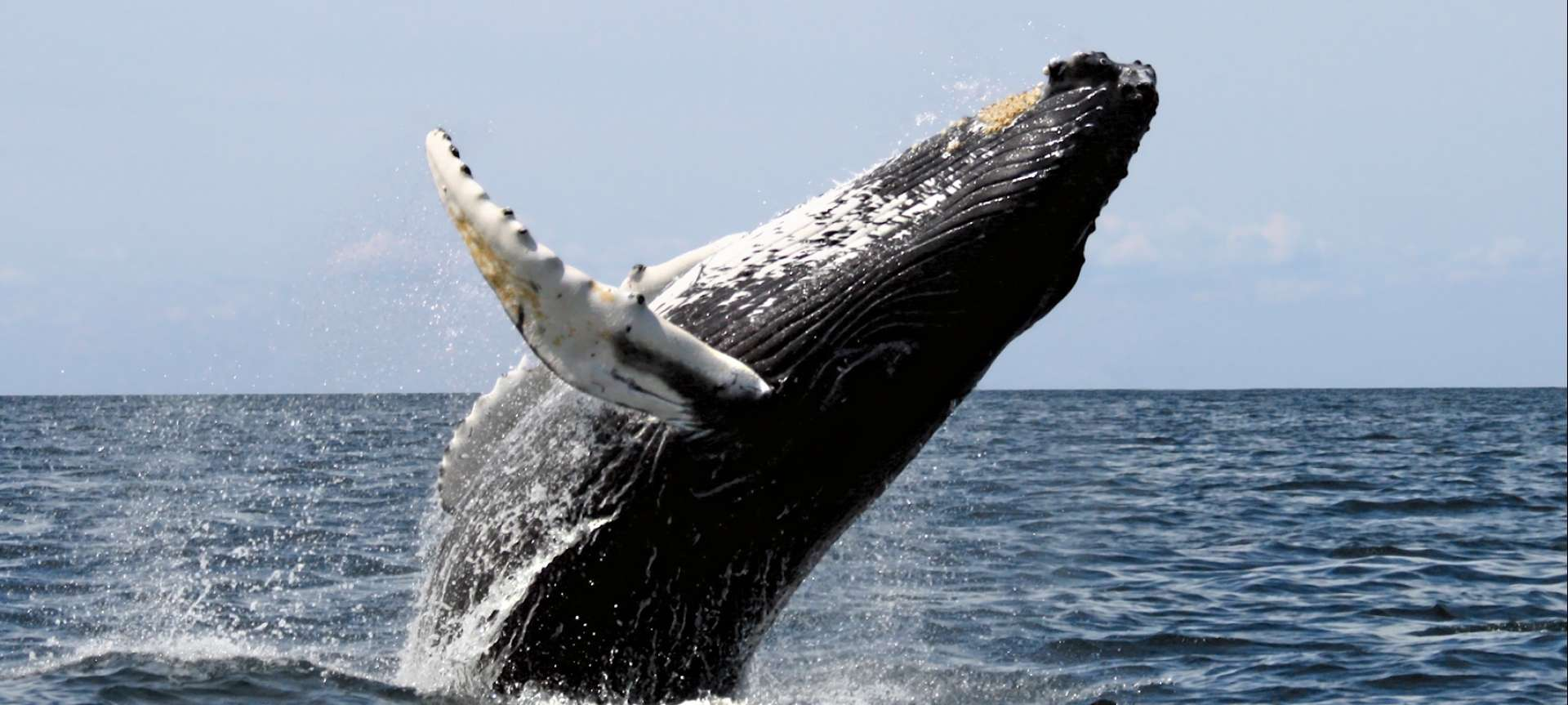August is a great time for whale spotting