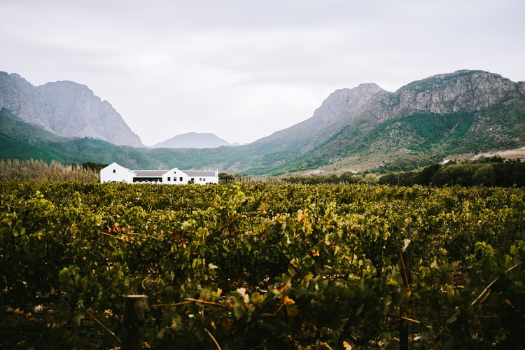 The Western and Eastern Cape_Cape Winelands
