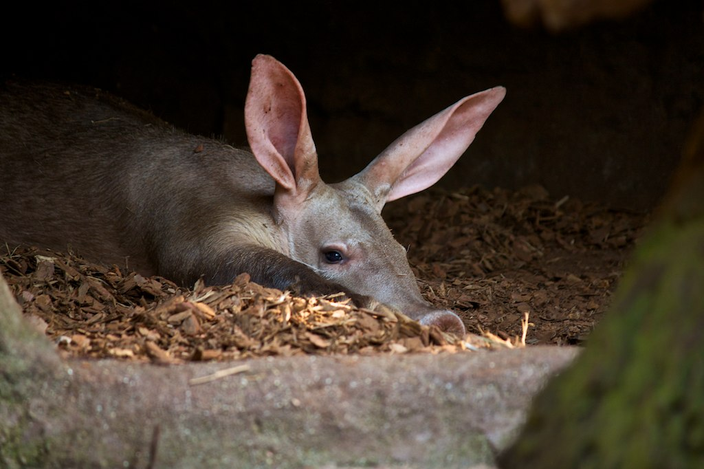 aardvark travel news namibia