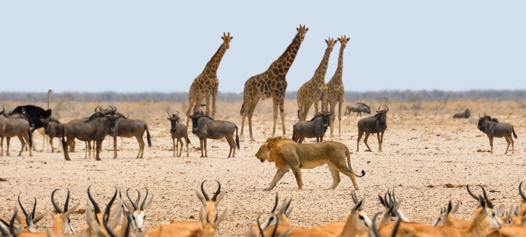 Resultado de imagen para Parque Nacional de Etosha,