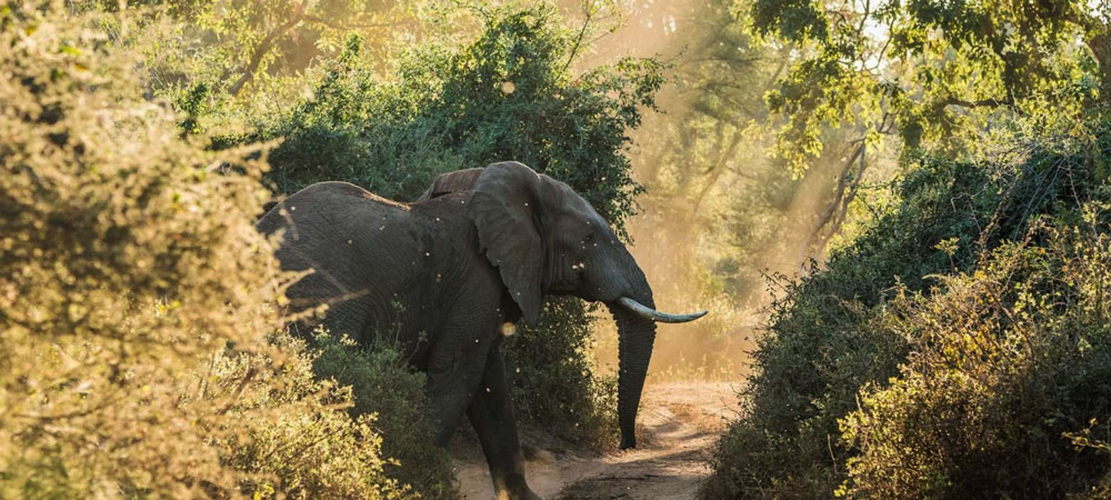 South Africa Safari | Everything to know | Discover Africa Safaris