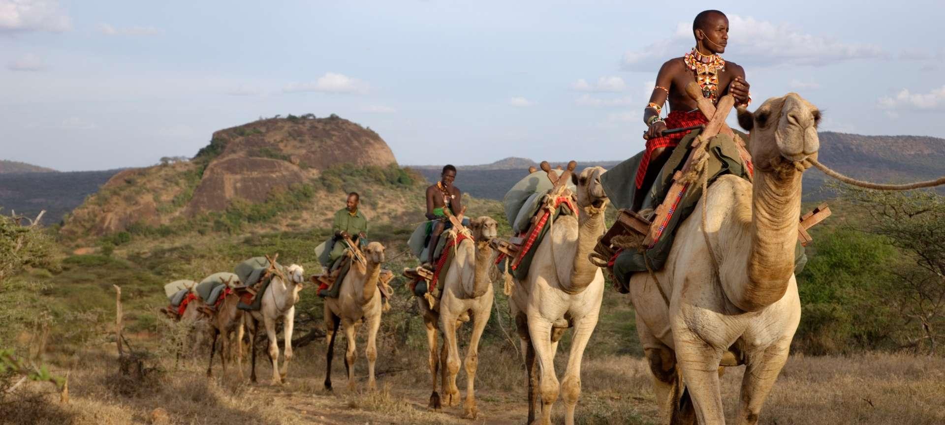 camel laikipia