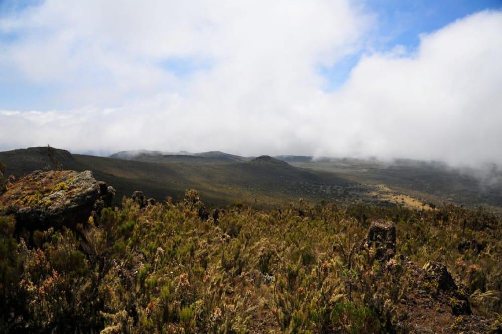 the moorlands of kilimanjaro