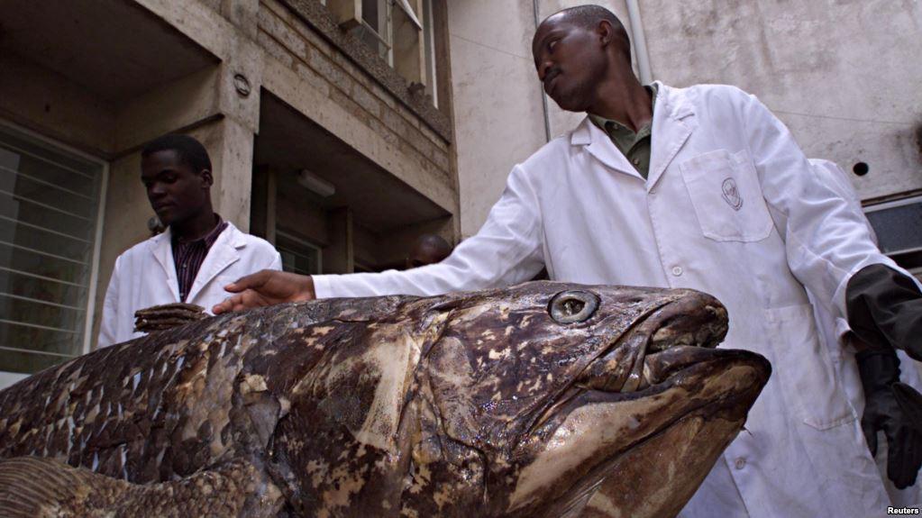 coelacanth national museum malindi