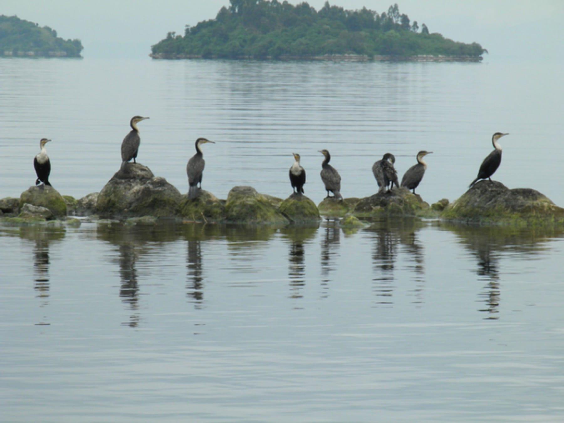 birding tour in lake kivu rwanda safari