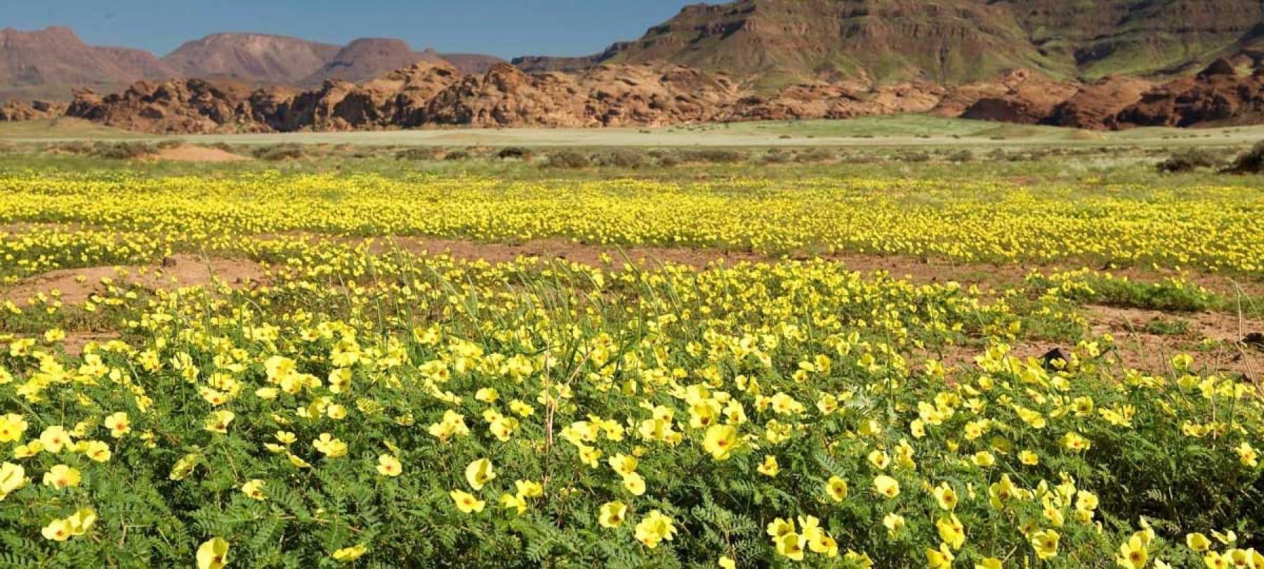damaraland spring