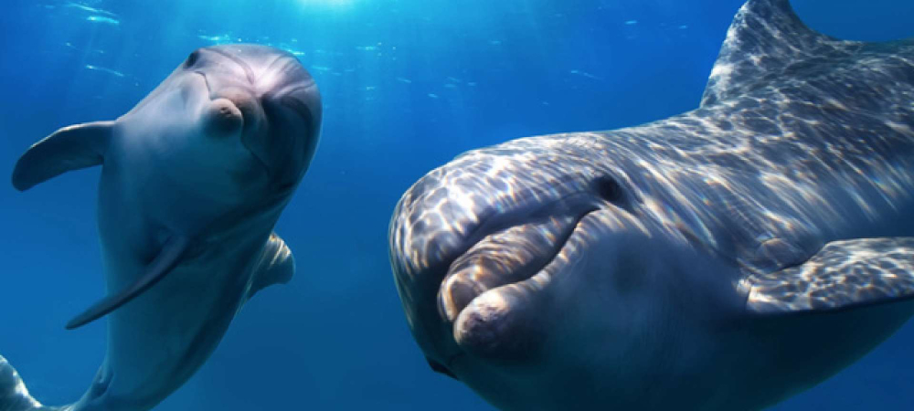marine life mozambique holiday dolphins