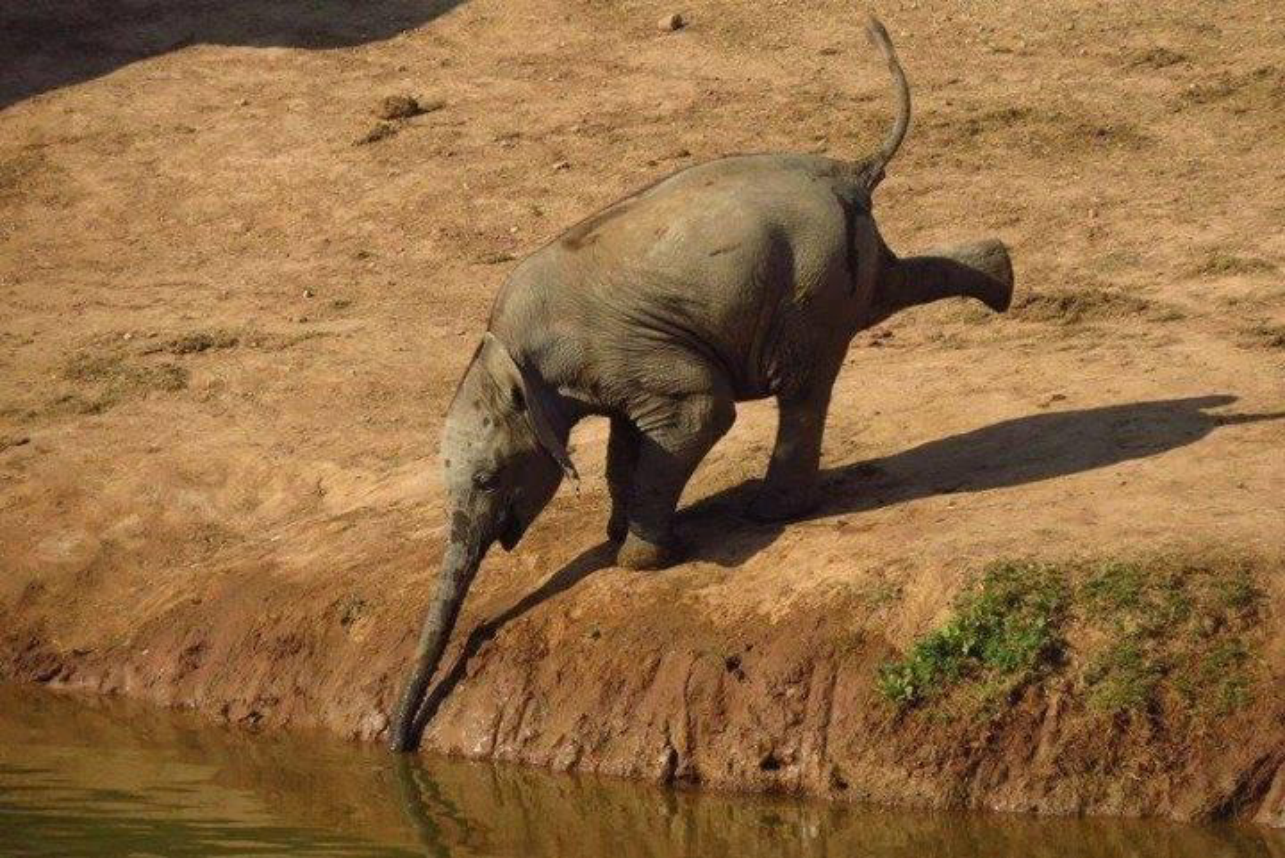 elephant akagera national park