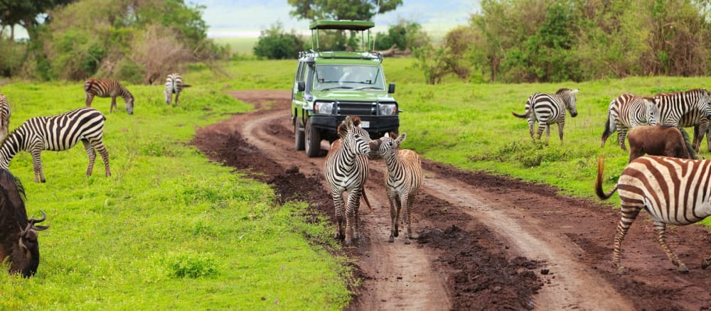green season ngorongoro crater game drive