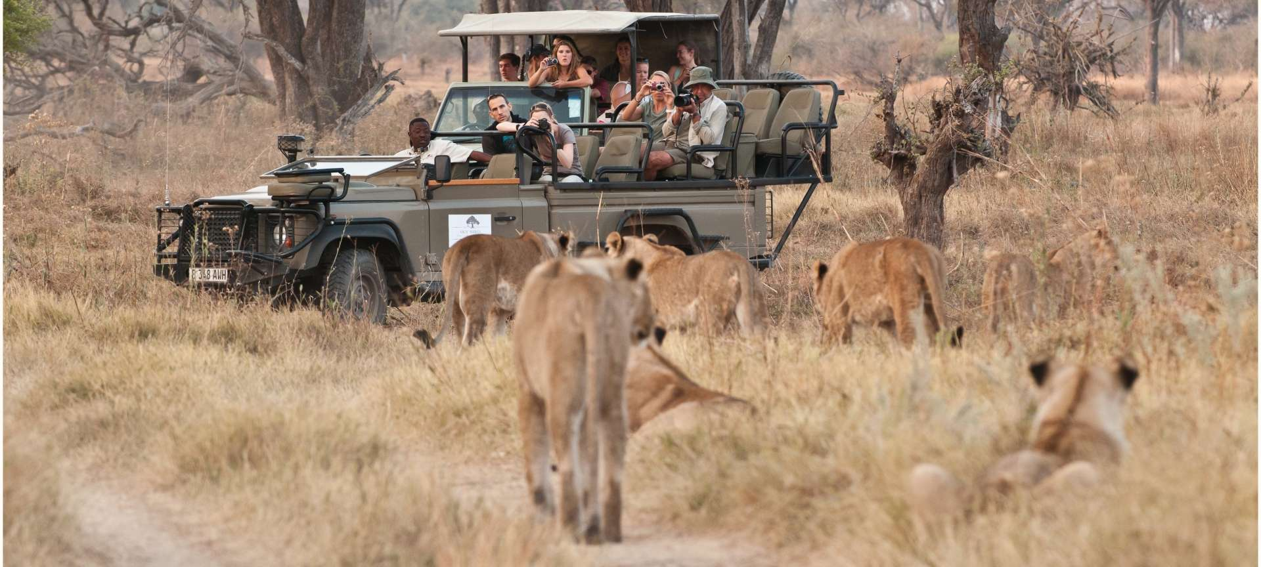 Families can enjoy safaris in Botswana