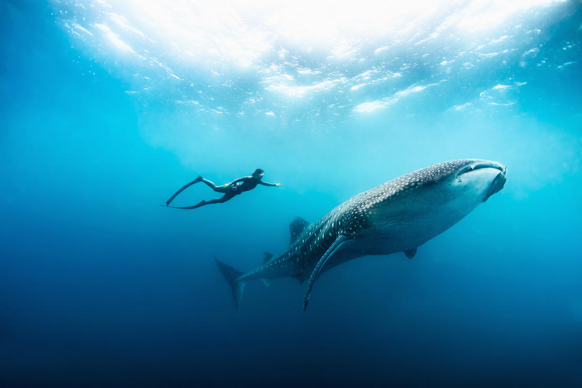 whale shark free diving zanzibar holiday