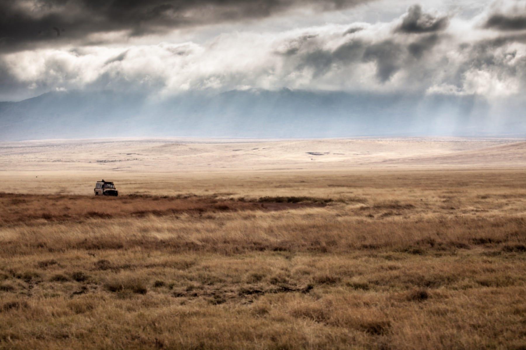 game drive ngorongoro crater tanzania safari