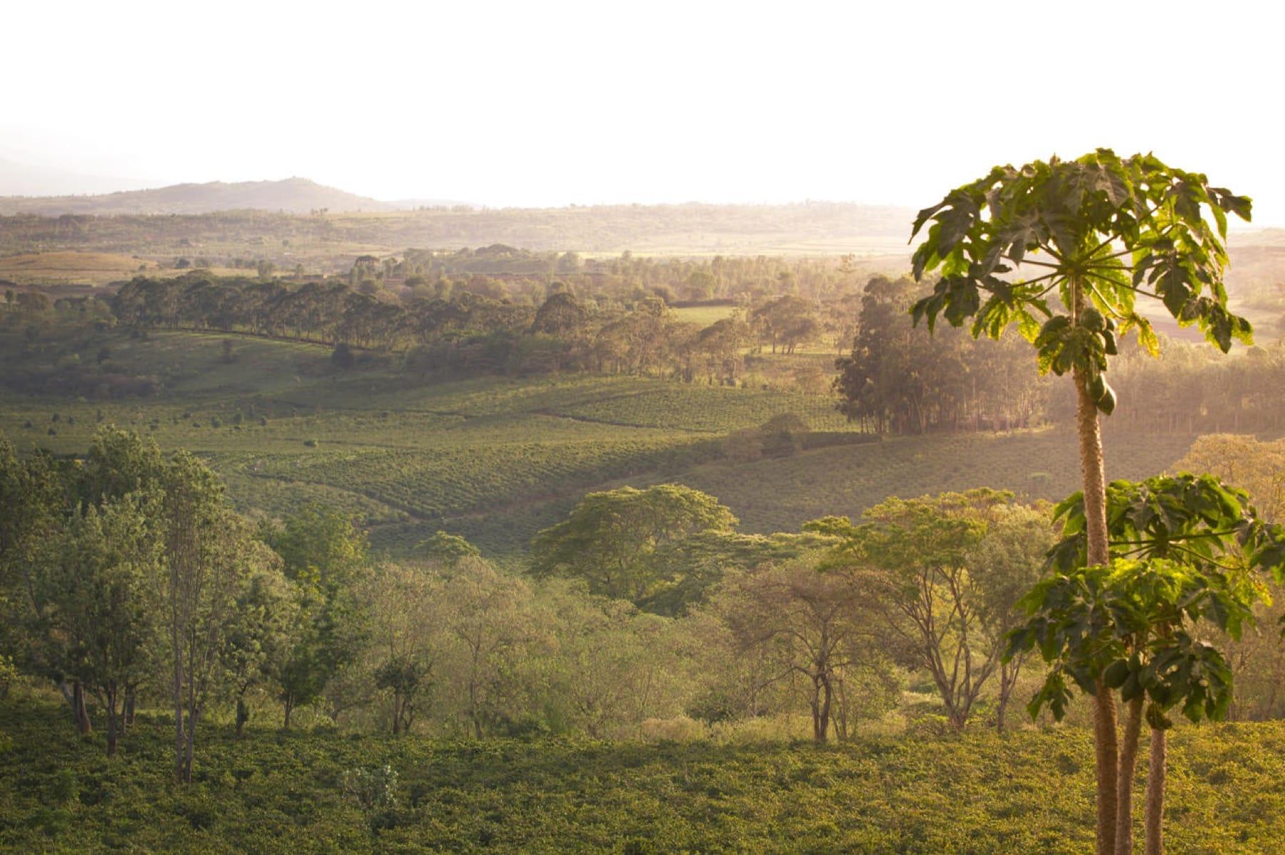 gibbs farm ngorongoro crater tanzania safari