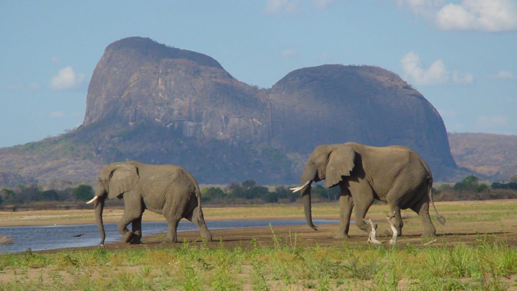 elephants gorongosa national park mozambique holiday