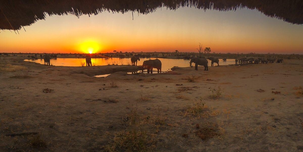 hwange national park on a safari in zimbabwe