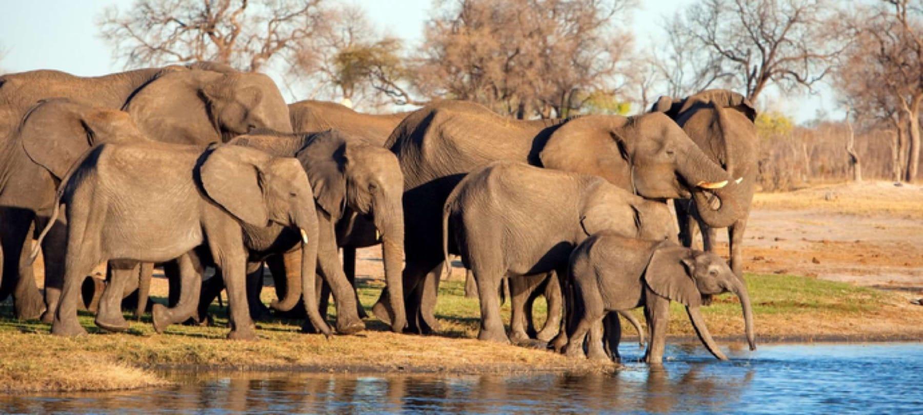 hwange national park zimbabwe safari elephants
