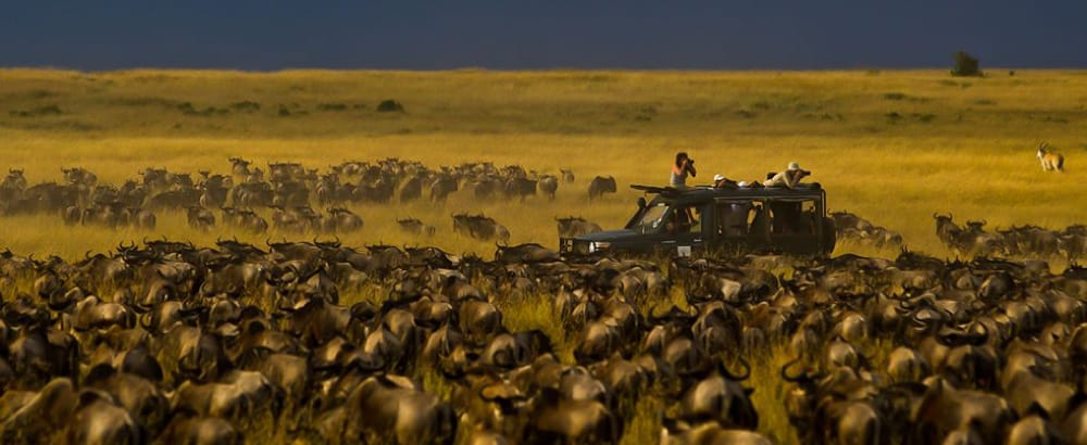 kicheche mara camp wildebeest migration photo safari