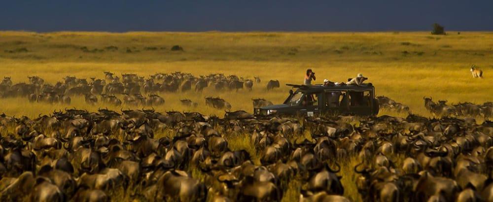 kicheche mara camp wildebeest migration photo safari