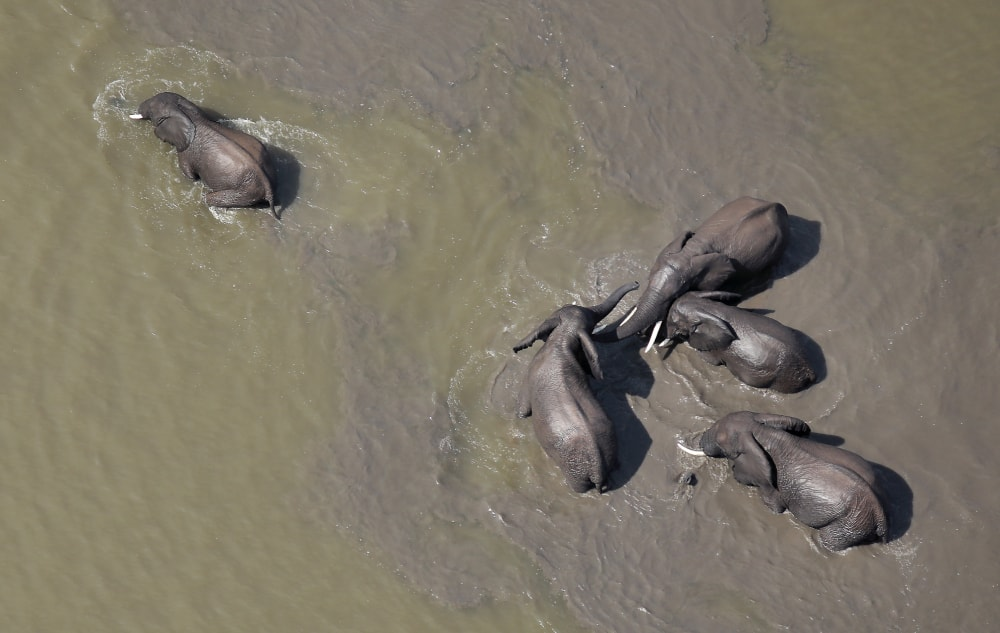 drone image of elephants in the kruger national park