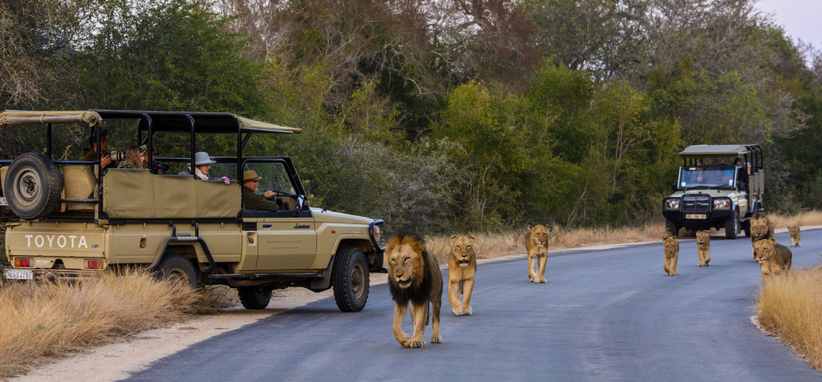 Kruger National Park Safari I Everything to know | Discover Africa Safaris