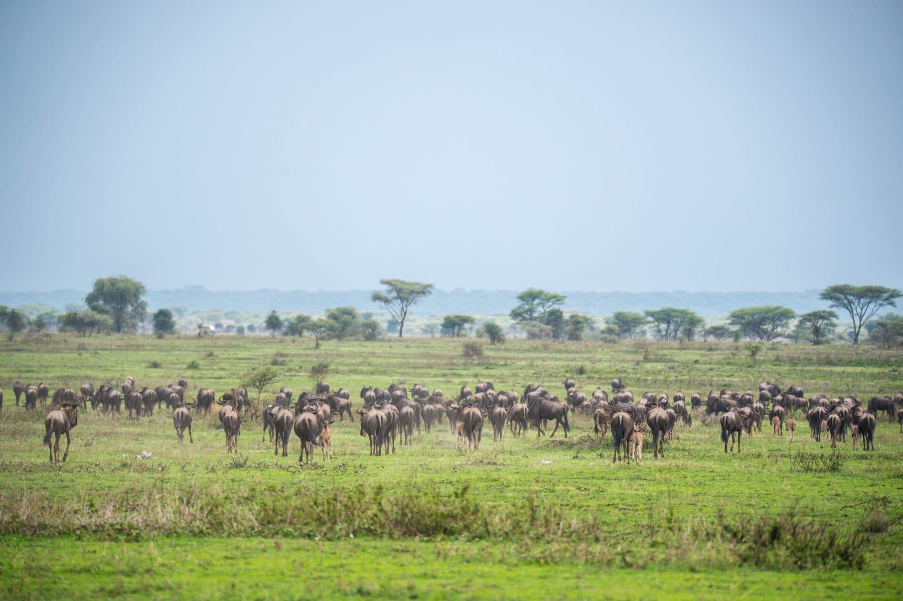 kusini camp serengeti tanzania
