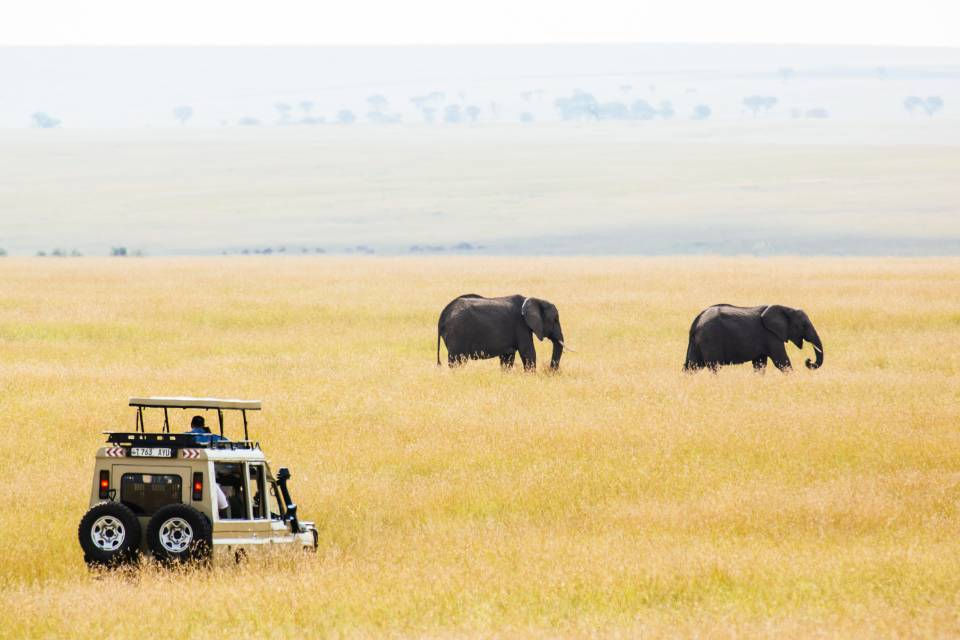 Elephant in a distance