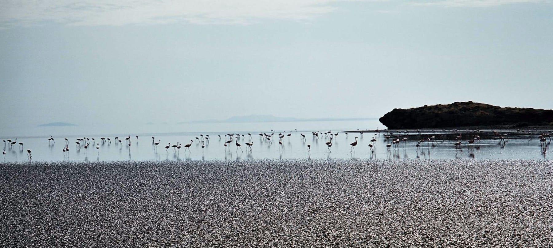 lake natron flamingos ngorongoro tanzania safari