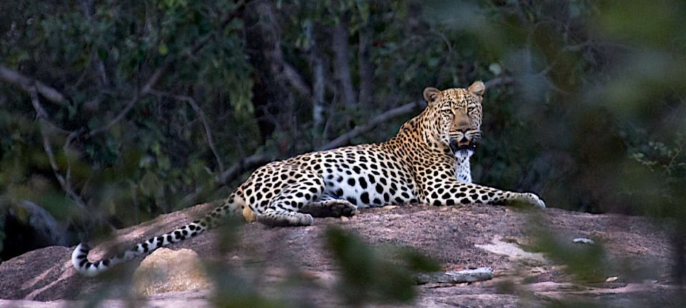 matobo national park in zimbabwe